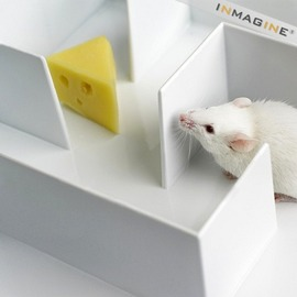 Mouse In The Maze
